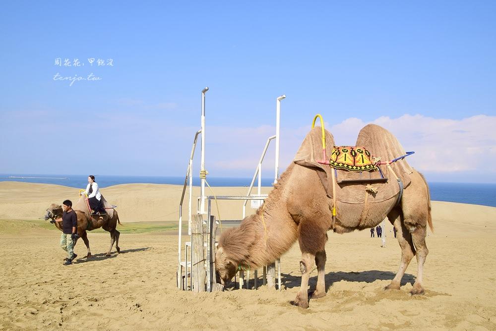 【山陰鳥取景點】鳥取砂丘 日本最大沙場絕景!前往交通方式、周邊旅遊資訊總整理 @周花花,甲飽沒