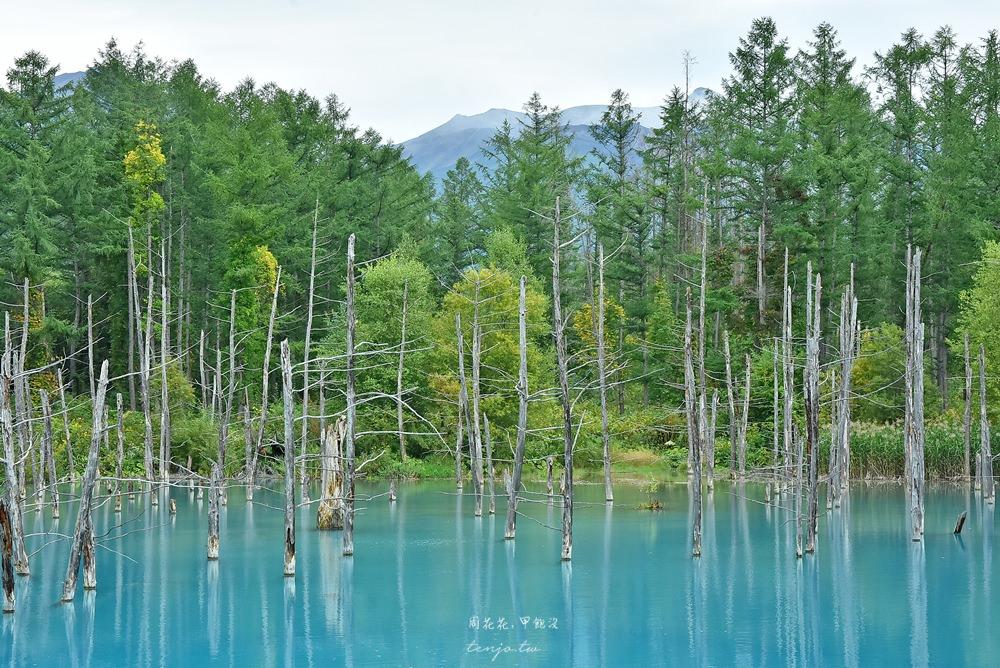 【北海道景點】美瑛青池、白鬚瀑布 蘋果桌布裡的夢幻水藍色,一生必去日本絕景 @周花花,甲飽沒