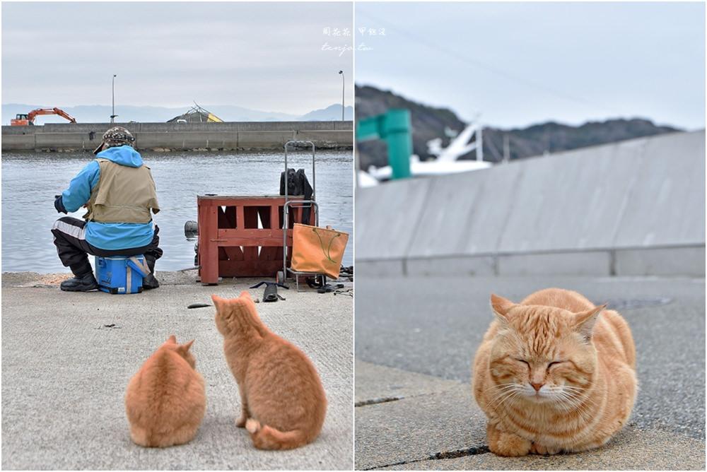 【九州福岡景點】相島 CNN評選世界六大貓島!前往交通方式、船班時間,冬天也推薦 @周花花,甲飽沒