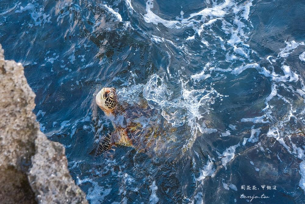 【小琉球景點推薦】龍蝦洞 人氣ig拍照景點!天然珊瑚礁岩海蝕溝,海龜多到近在腳邊 @周花花,甲飽沒